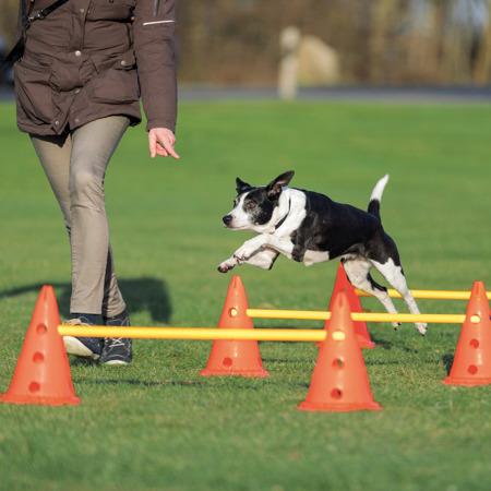 Duży tor przeszkód dla psów